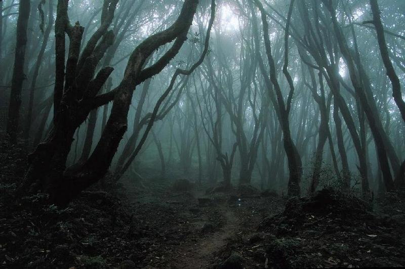 Florestas assombradas