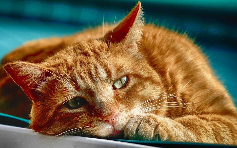 Um gato saudável
